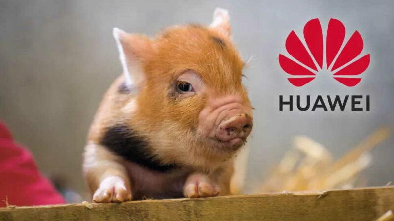 Huawei se zaměří i na chov prasat